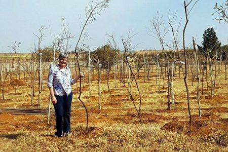 Indigenous forest planted at Elvira Rota Village